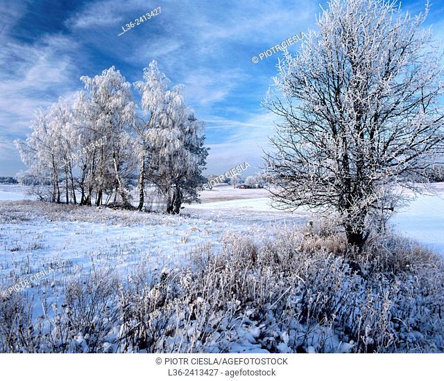 First snow. Poland