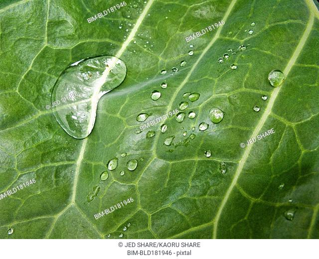Close up of water droplets on leaf