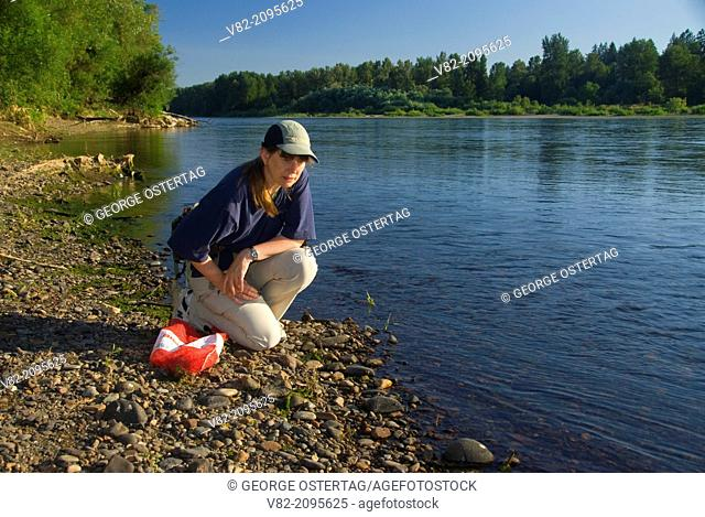 Rock-collecting on Willamette River bar, Willamette Mission State Park, Oregon