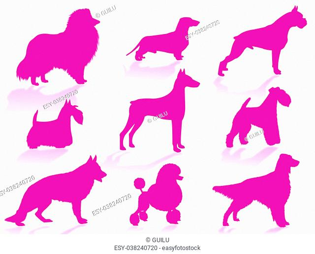 Dogs silhouette to represent different dog breeds