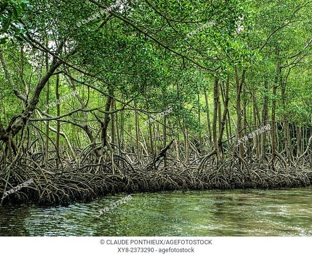 Mangrove, Los Haitises National Park, Dominican republic