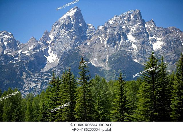A view of the Grand Tetons towering above green fir trees with blue skies