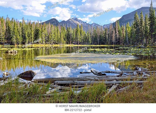 Nymph Lake, Rocky Mountain National Park, Colorado, USA