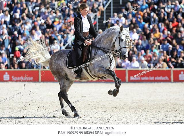 """29 September 2019, Baden-Wuerttemberg, Gomadingen-Marbach: During the 2019 Stallion Parade, a rider from a Spanish group of riders will be on the """"""""Spain""""""""..."""