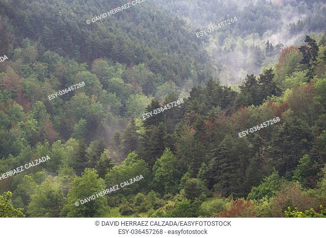 Autumn misty forest in La Rioja, Spain