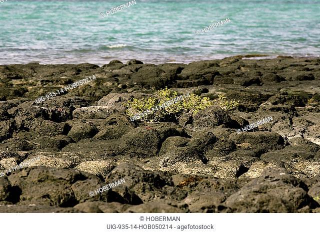 Rocks, Roche Noire, East Coast, Mauritius