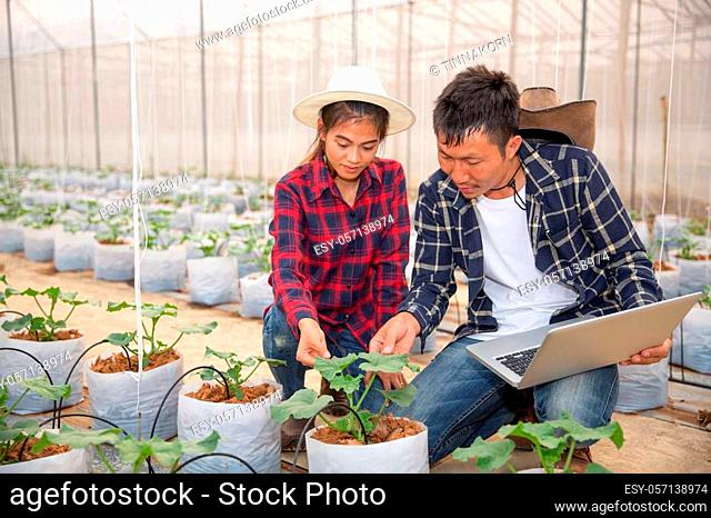 Agronomist examining plant in melon field, Couple farmer and researcher analyzing melon plant