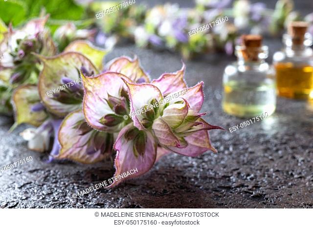 Fresh clary sage plant with bottles of essential oil in the background