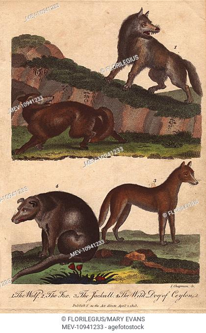 Wolf, fox, jackal, and wild dog of Ceylon. Handcolored copperplate engraving from Ebenezer Sibly's Universal System of Natural History, 1794
