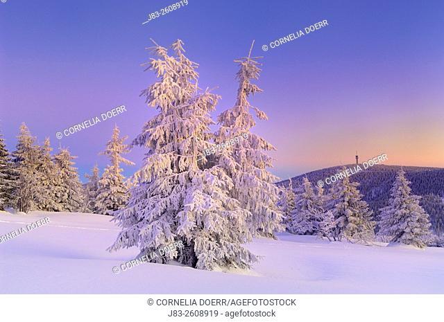 Snow covered spruce trees, Fichtelberg, Oberwiesental, Erzgebirge, Saxony, Germany