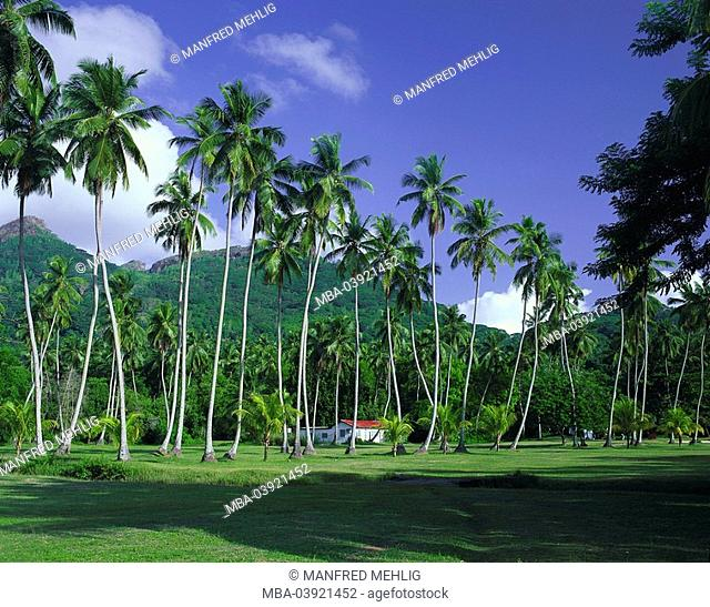 Seychelles, island, palms, house, mountains, island state, island-group, landscape, hill-landscape, hill, vegetation, trees, coconut-palms, palm-grove