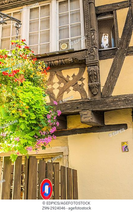flower-decked facade of traditional alsatian house with cat looking down on the street, petit france district, strasbourg, alsace, Bas-Rhin, France