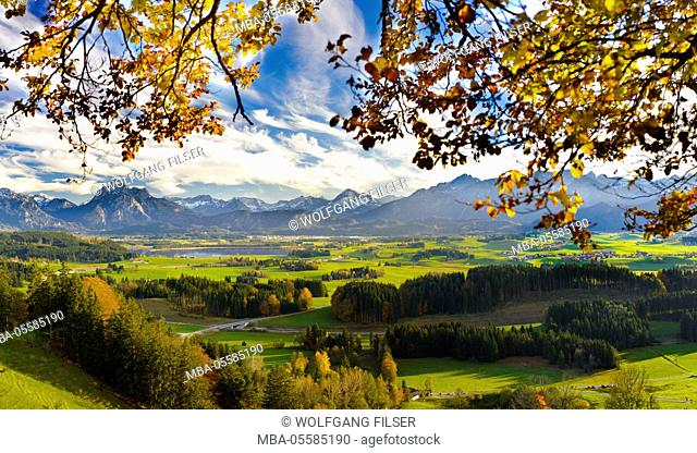 Panorama scenery in Bavaria close Hopfensee in the Allgäu and the mountain range of the alps close mountain Säuling in front of Füssen