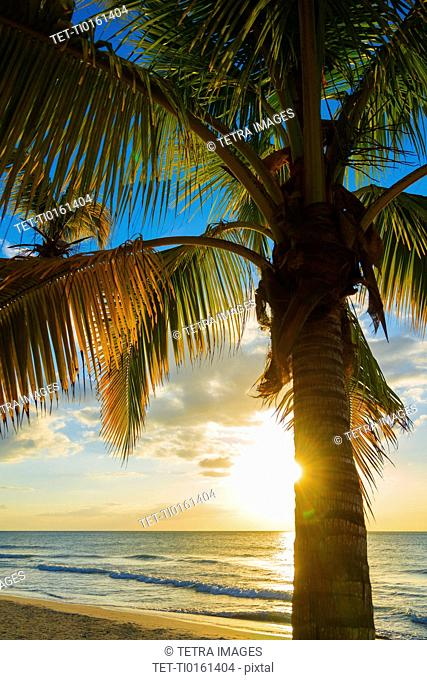 Palm tree on beach at sunset