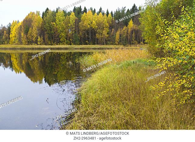 Autumn season landscape with colorfull aspen trees and birch trees reflecting in water, Piteå county, Norrbotten, Sweden