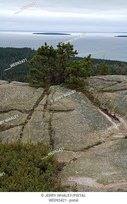 Scenic View, Gorham Mountain Trail, Acadia Nat Park, ME