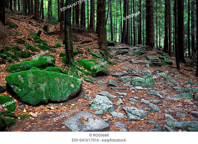 Poland, Sudetes, Karkonosze Mountains, Karkonoski National Park, rocky trail in the forest