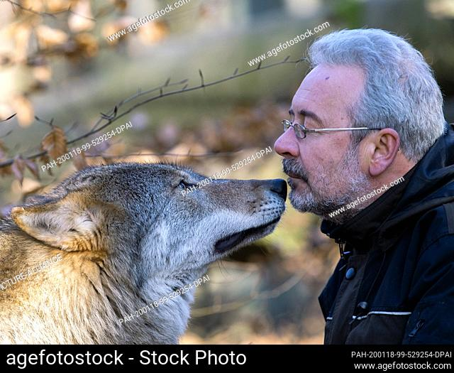 16 January 2020, Brandenburg, Neuruppin: Zoo manager Peter Mancke is welcomed by the wolf Bela in the Tierpark Kunsterspring