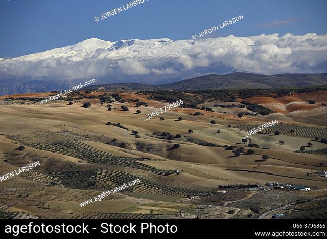 Sierra Nevada Granada province, Andalusia, Spain