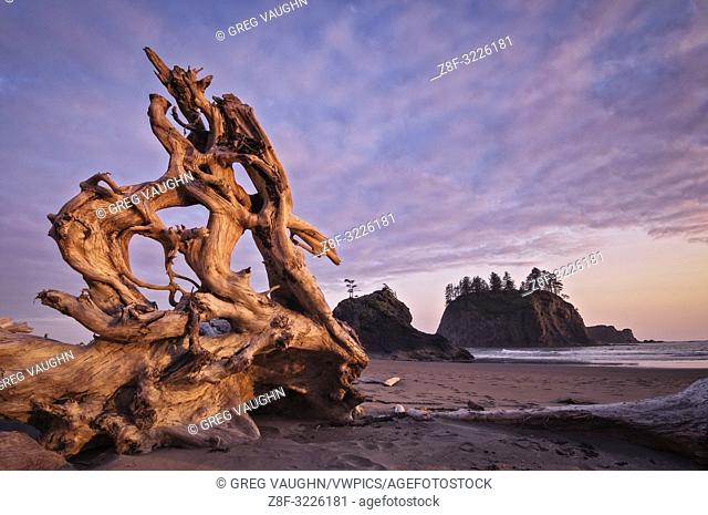 Driftwood on Second Beach, Olympic National Park, Washington