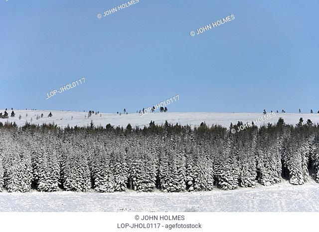 Scotland, Aberdeenshire, Glen Buchat, A view to a snowy pine forest in Aberdeenshire