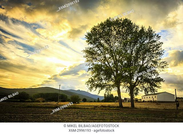 Tree and sky with clouds. Ancin. Navarre, Spain, Europe