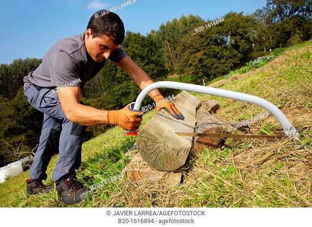 Farmer chopping wood with hacksaw, Bow saw, Agricultural and gardening hand tool, Usurbil, Gipuzkoa, Basque Country, Spain