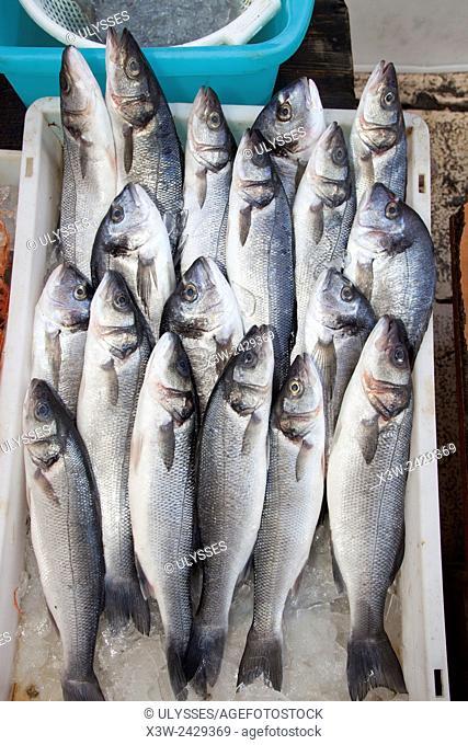 sea bream, fish market, fishing port, Bari, Puglia, Italy, Europe