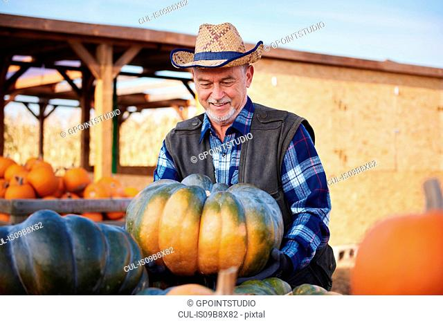 Farmer with pumpkin harvest