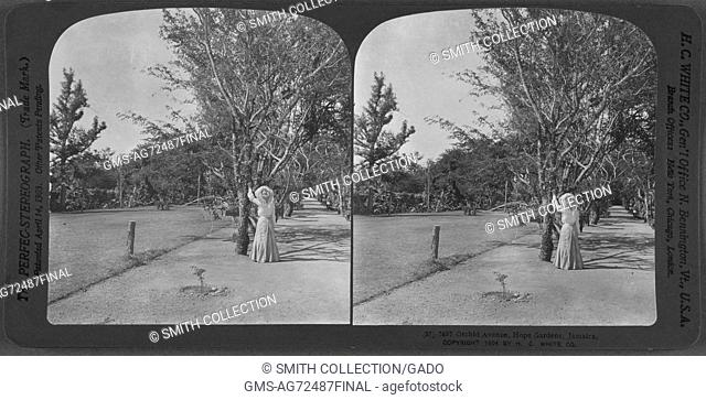 Orchid Avenue, Hope Gardens, Jamaica, 1904. From the New York Public Library