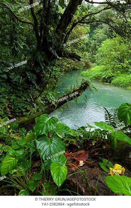 Costa Rica. Tenorio, National park Volcan Tenorio, Rio Celeste river