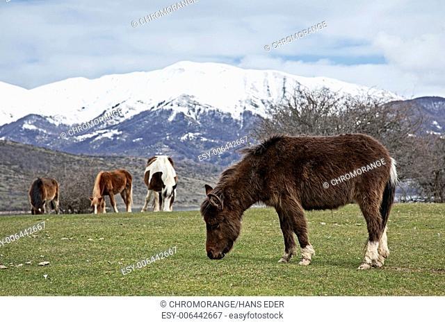 horses near Lago Campotosto