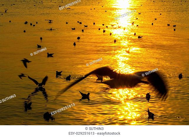 golden sunset with seagull play on water at Bang Pu Seaside of Thailand
