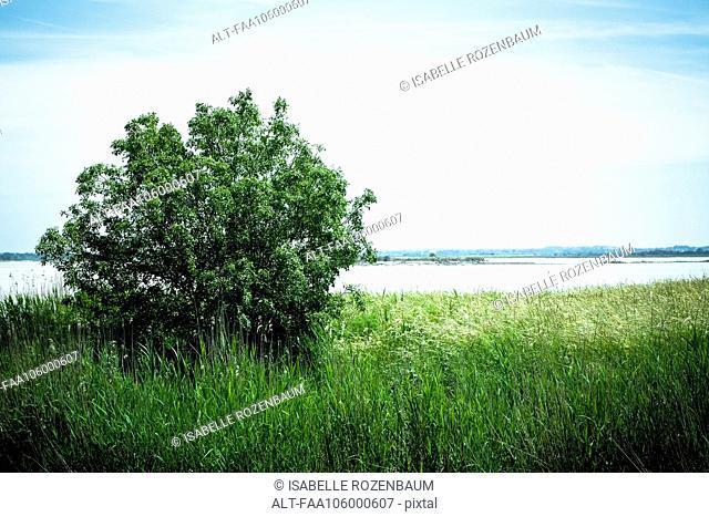 Tree growing on grassy riverbank
