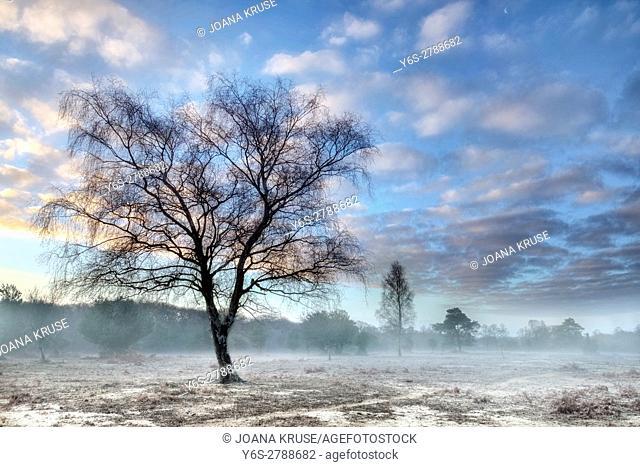 Ocknell, New Forest, Lyndhurst, Hampshire, England, UK