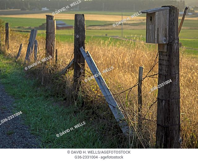 Barbed wire and straw grass field at Coupeville, Washington, United States