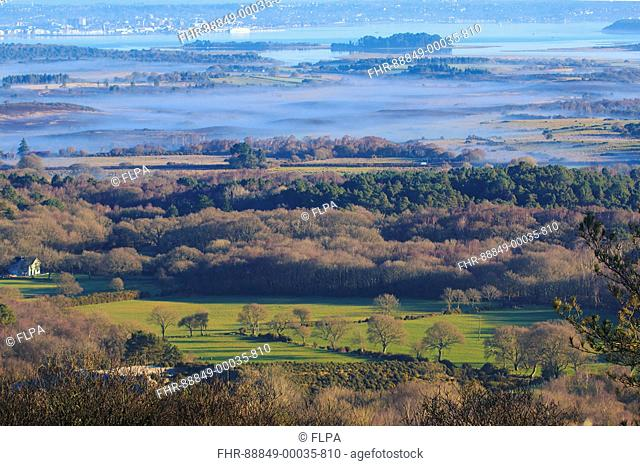 View of trees, heathlandk forest and pasture looking towards distant Poole Harbour with mist rising in early morning, from Creech Hill, Dorset, England, January