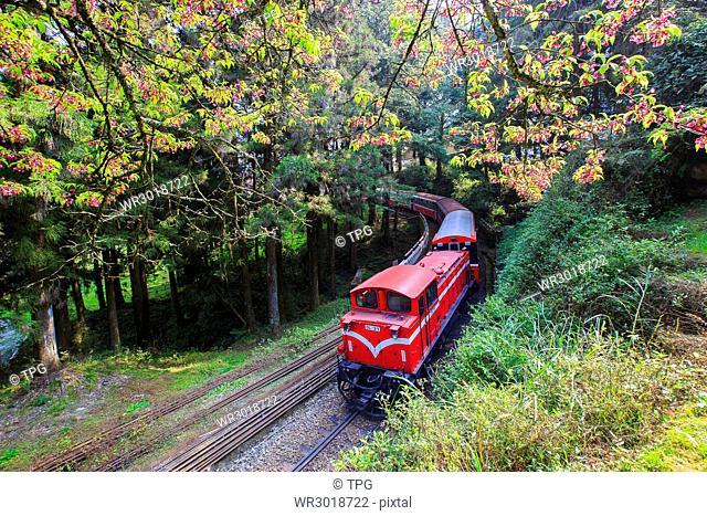 Ali train