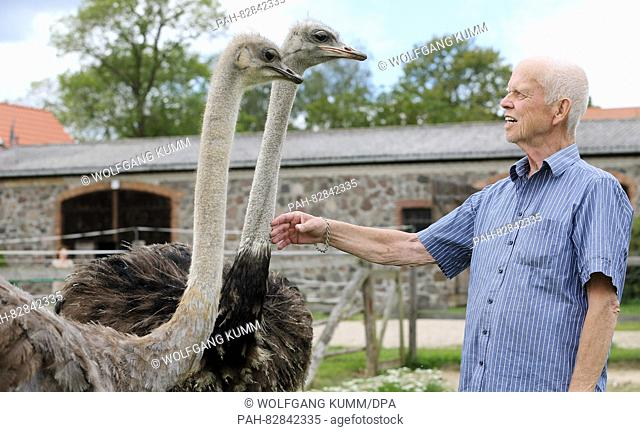 Gerd Roos presenting young ostrich birds on his ostrich farm in Reichenberg, Germany, 16 August 2016. The flightless birds can reach upto 70 years