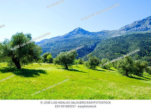 Guadiaro Valley, Jimera de Líbar, Málaga, Andalusia, Spain, Europe