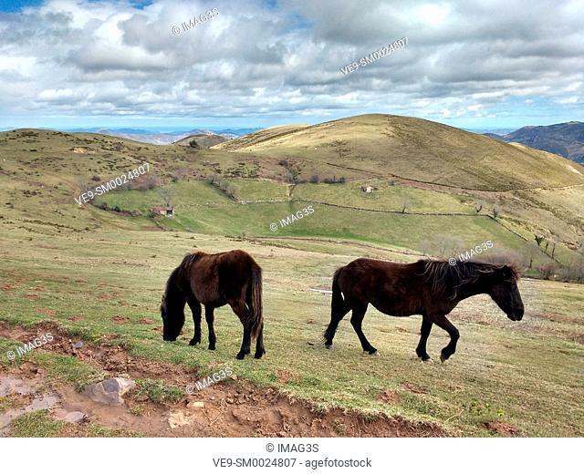 'Asturcón' breed horses, in Calzada Romana de La Mesa, in the limit of Belmonte de Miranda and Yernes y Tameza municipalities, Asturias, Spain
