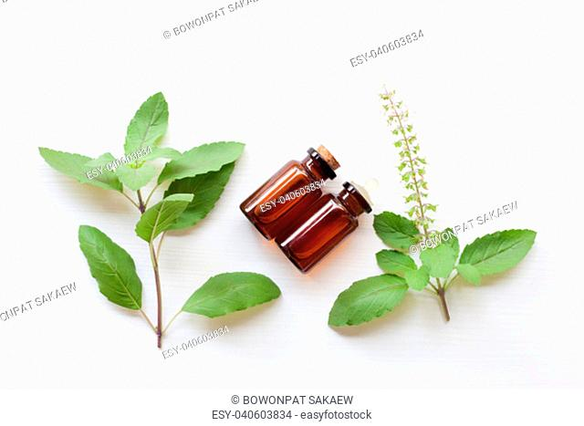 Holy basil essential oil with fresh leaves