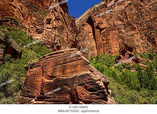 The USA, Utah, Washington county, Springdale, Zion National Park, Zion canyon, Upper Emerald Pools Trail