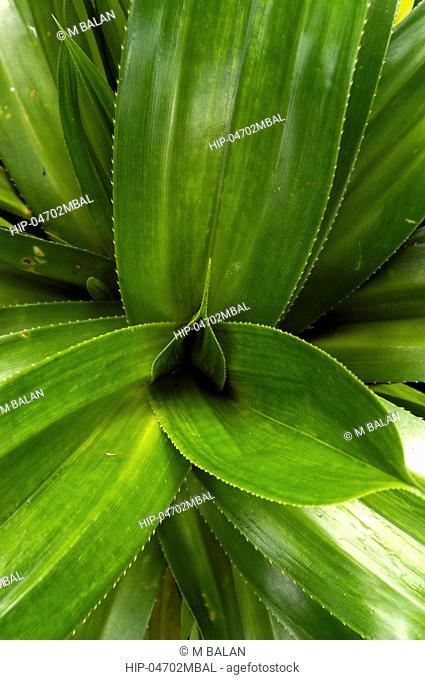 AYURVEDA HERB MEDICINAL PLANT