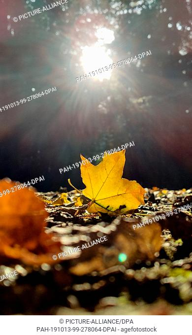13 October 2019, Baden-Wuerttemberg, Freiburg: An autumnal leaf lies in the sun in the forest. Photo: Patrick Seeger/dpa