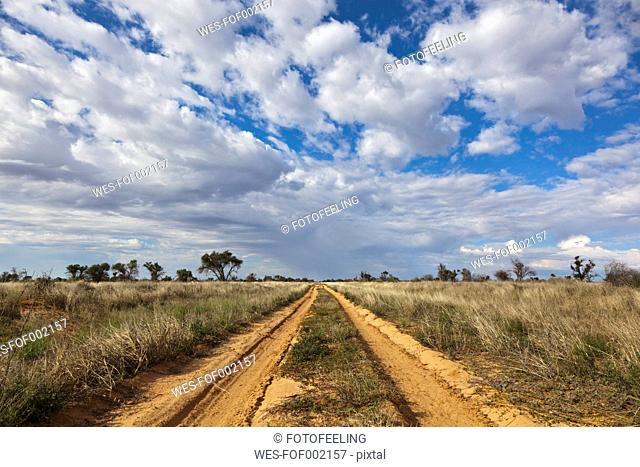 Africa, Botswana, Mabuasehube, Offroad track in the Kalahari