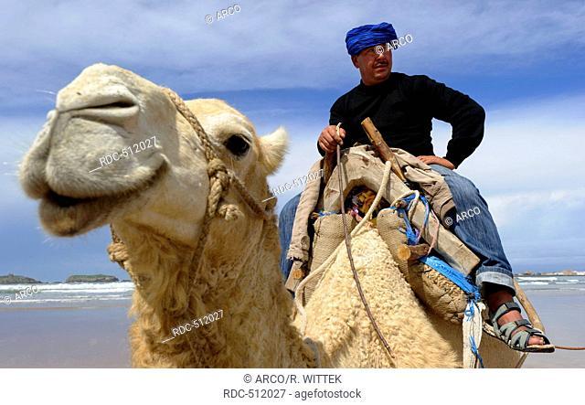 Marocco, Africa, cameleer, Beach, Essaouira