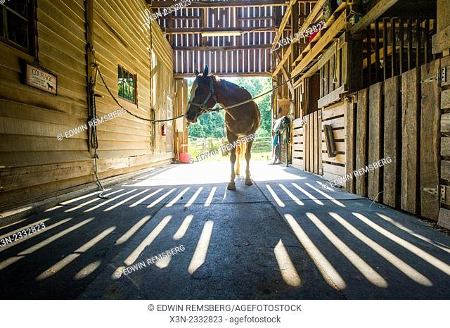 Horse in a stable showing shadows from the wood slats in