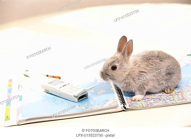 A Rabbit Surrounded By Everyday-belongings, High Angle View