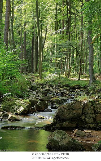 Gebirgsbach Ilse im Nationalpark Hochharz, in Sachsen-Anhalt / Deutschland, im Herbst, Mountain stream Ilse in the Harz National Park